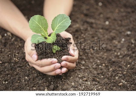 Hand of young people to plant vegetable seedlings in the field, - stock photo