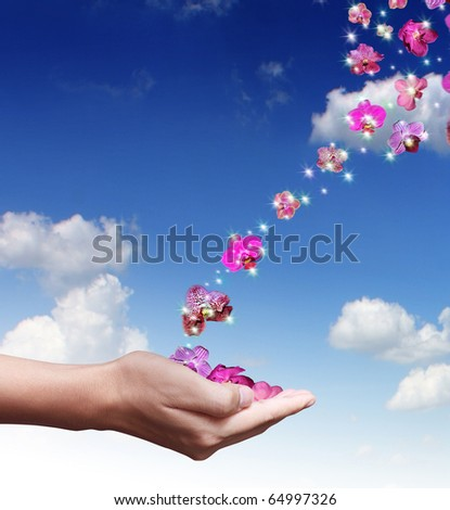 hand orchid - stock photo