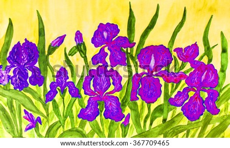 Hand painted picture, watercolours, flower bed with many blue and purple irises on yellow background.   - stock photo
