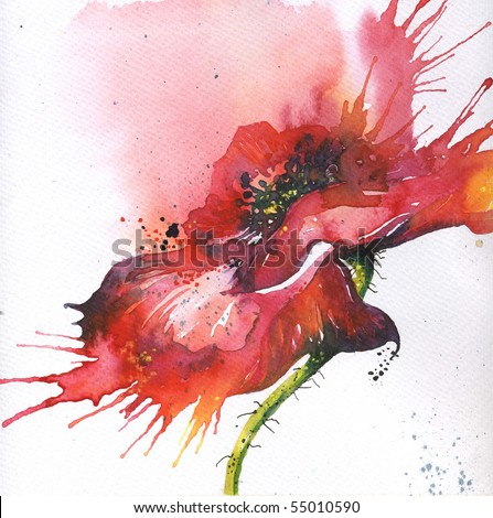 Hand-painted poppy illustration - stock photo