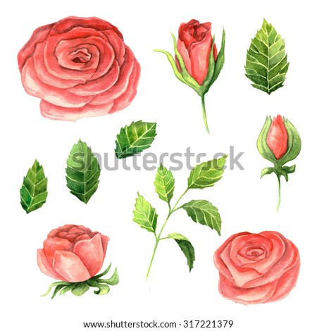 Hand painted watercolor roses and leaves. Isolated floral clip art. DIY collection of flower - stock photo