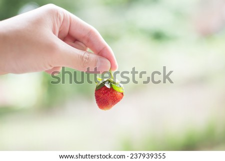 Hand pick up strawberry - stock photo