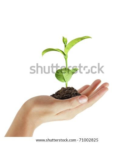 hand plant - stock photo