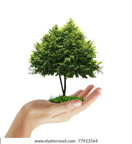 hand plant ,tree - stock photo