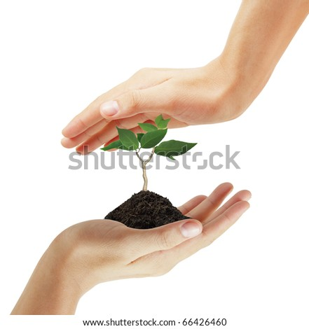 Hand protects a small tree on white background - stock photo