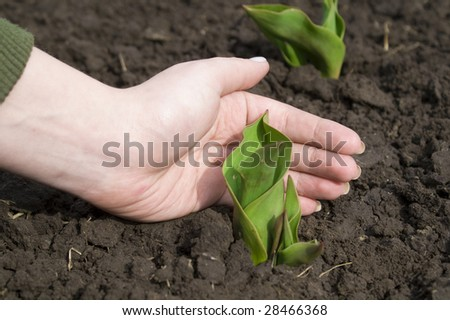 hand protects little plant. ecology concept