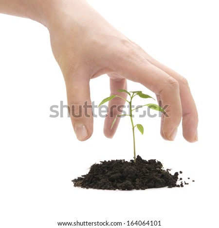 hand roof and plant on a white background - stock photo