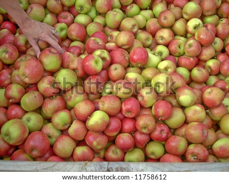 Hand Selecting Apples in a Half Full Bin
