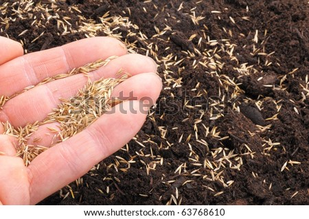 hand sowing seed on soil showing growth concept - stock photo