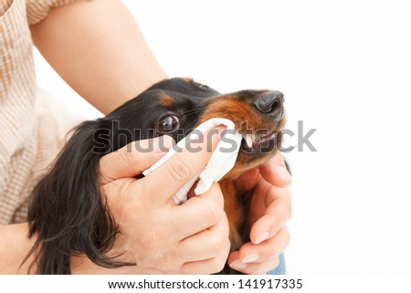 Hand to clean the teeth of dogs