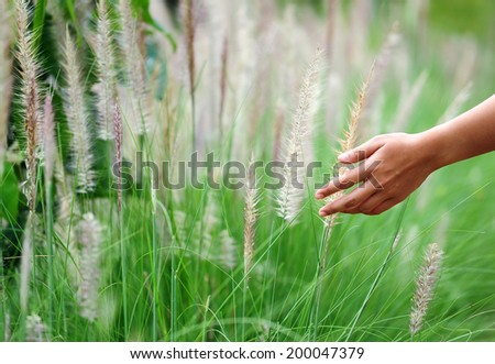 Hand touching a reed grass beautiful scene. - stock photo