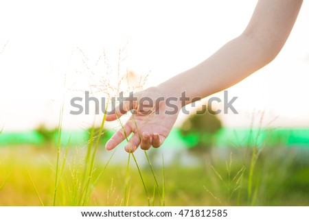 hand touching green grass at meadows