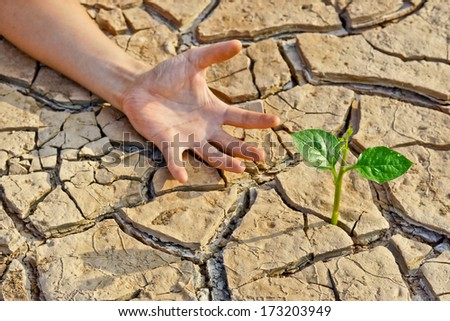 hand trying to reach a tree growing on cracked earth / tree growing on cracked earth / growing tree / save the world / environmental problems / cut tree