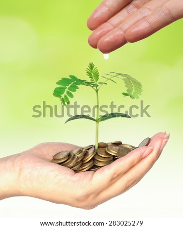 hand watering a young plant growing on pile golden coins isolated / Business with csr practice / Green Business