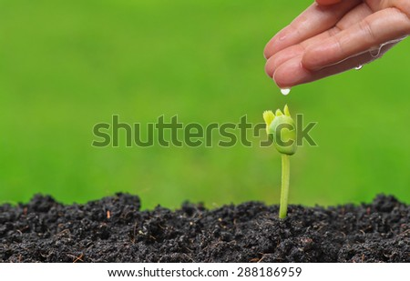 hand watering a young plant seedling with green background - stock photo