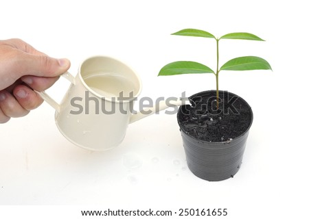 hand watering a young tree growing in a black plastic pot with isolated background - stock photo