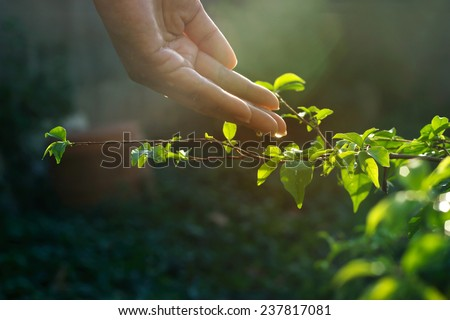 hand watering pouring on green plant in sunshine - stock photo