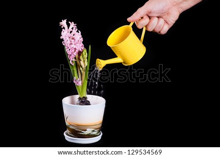 hand watering the flower - stock photo