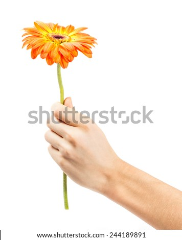 hand with a flower isolated on white