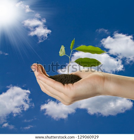 Hand with a plant, blue sky with sun - stock photo