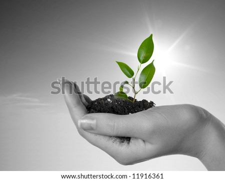 Hand with a plant on a background of the blue sky. Black-and-white background and green plant - stock photo