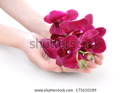 Hand with beautiful blooming orchid isolated on white - stock photo