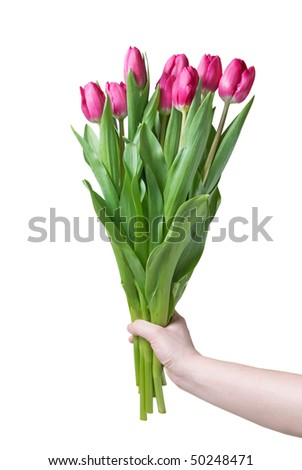 Hand with bouquet from pink tulips isolated on white - stock photo
