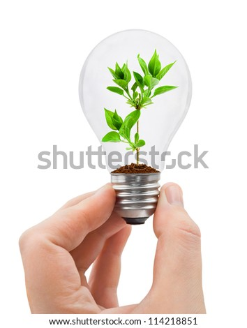 Hand with bulb and plant isolated on white background