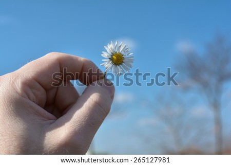 Hand with daisy in front of blue sky in springtime - stock photo