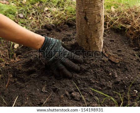 hand with glove planted the tree in soil - stock photo