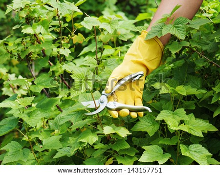Hand with green pruner in the garden. - stock photo