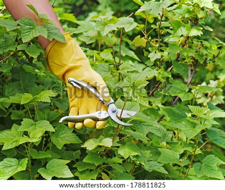 Hand with green pruner in the garden. Closeup. - stock photo