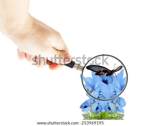 hand with magnifying glass and butterfly on flowers violets - stock photo