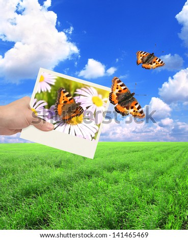 Hand with photo and butterfly. On background of the summer landscape