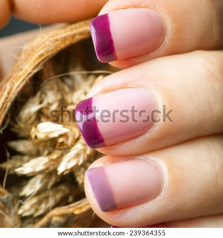 Hand with purple acrylic manicure holding wheat spikelets close up - stock photo