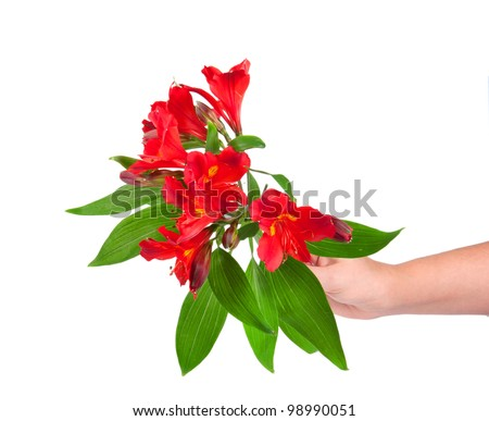 hand with spring flowers isolated on white