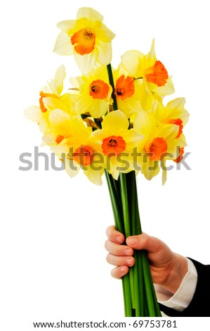 Hand with the bunch of daffodils isolated on the white background.