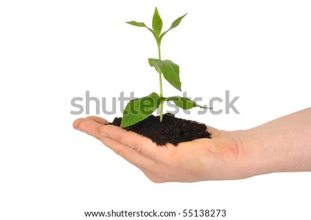 Hand with young plant isolated on white background