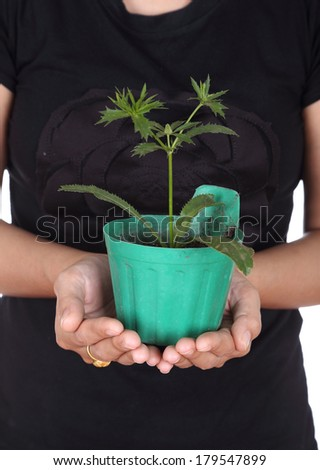 hand with young seedlings of parsley in small pot - stock photo