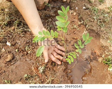 Hand working planting tree with grounds