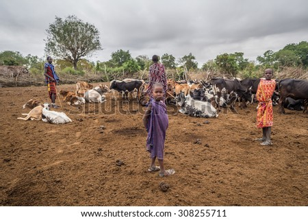 HANDENI, TANZANIA - AUGUST 01, 2015: Boys with their cattle in Maasai boma (village) in Tanzania, Africa. - stock photo