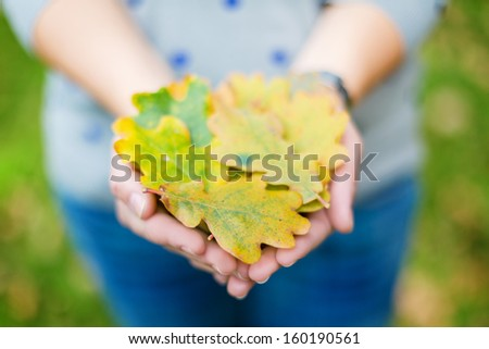 Handful of oak leaves with slight added vignette  - stock photo