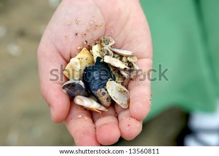 handful of sea shells - stock photo