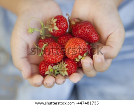 handful of strawberries in the hands of the boy - stock photo