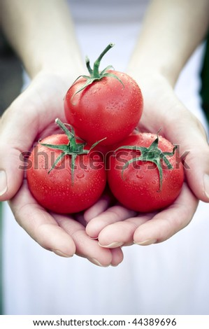 Handful of Tomato - stock photo