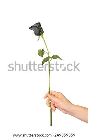 handing a black rose   as a representation of fail love - stock photo