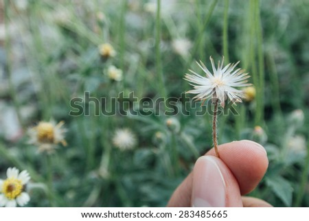 Handing white wildflowers in the spring garden, Blurred background, Vintage tone - stock photo