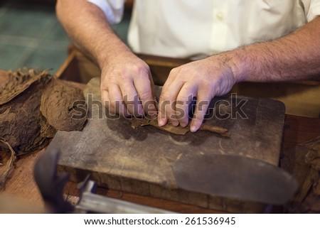 Handmade cigar live preparation - stock photo