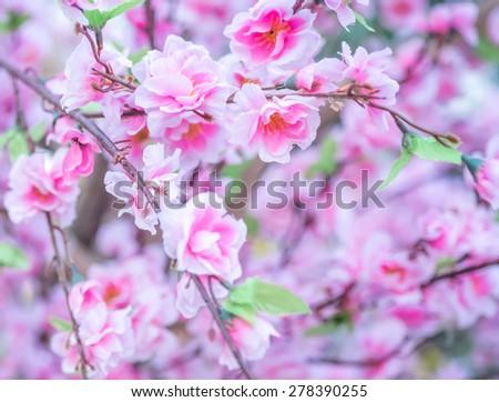 Handmade sakura flowers; beautifle blur pink flower with smooth light - stock photo