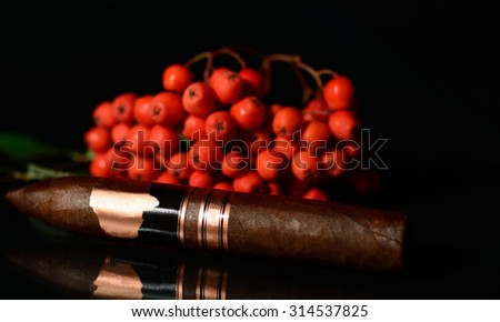 Handrolled elegeant old cigar with rowanberries in the background isolated over black background
